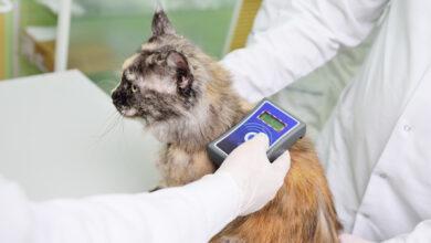 В Финляндии планируют ввести обязательное чипирование кошек