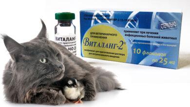 В Новосибирске разработали противовирусный препарат «Виталанг-2» для животных