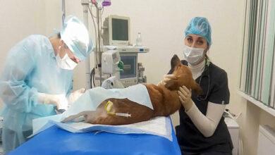 Эпидуральная анестезия в ветеринарии