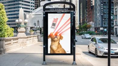 В Чикаго зоозащитники принимают пожертвования на ветклинику в криптовалюте