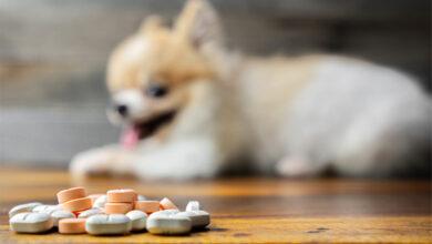 Проект упрощения использования лекарств для животных поддержал Минсельхоз