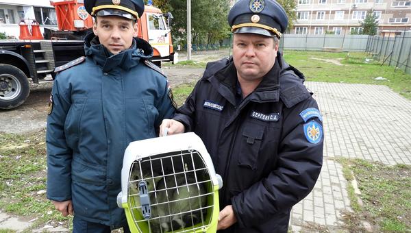 Из обрушившегося в Ногинске дома спасли последнего кота. Фото bogorodsky-okrug.ru