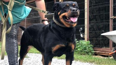 Ветслужба бесплатно поможет животным из пострадавшего дома в Ногинске