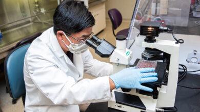 Ветеринарные вирусологи из Канзаса получили грант на исследование COVID-19