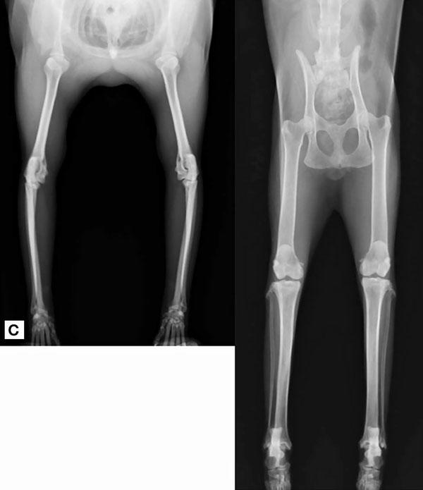 Дегенеративное заболевание суставов: рентгенограммы C