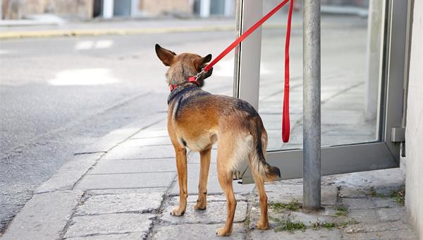 В Великобритании кража домашних животных станет уголовным преступлением