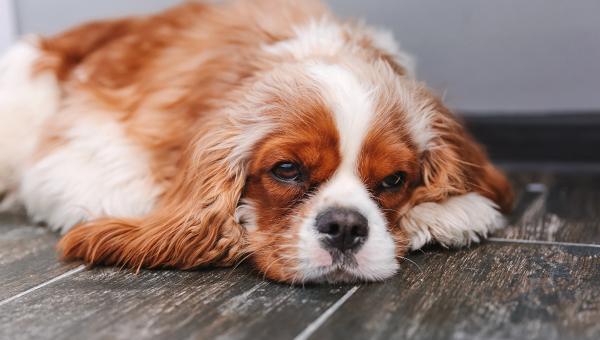 Исследователи изучили породы собак на предмет накопления мутаций