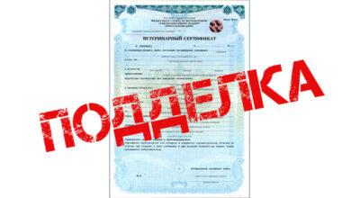 В Барабинске бизнесмена и ветврача арестовали за использование фальшивых ветсертификатов