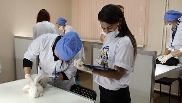 В Самарской области назвали лучшего ветеринарного фельдшера России. Фото: пресс-служба правительства СО