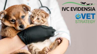 Ветеринарные компании IVC Evidensia и VetStrategy объявили об объединении