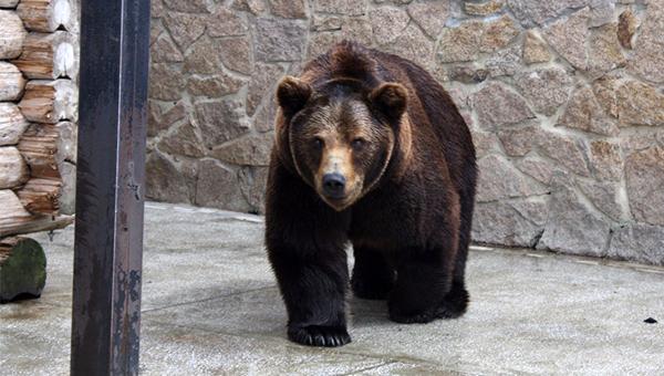 В Челябинском зоопарке погибли два медведя