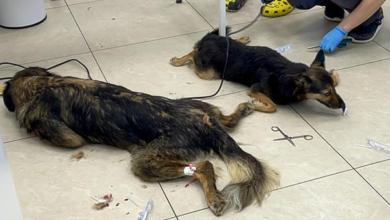 В Подмосковье в приюте внезапно заболели и начали умирать животные, есть подозрения об отравлении собак