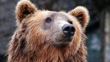Полиция задержала подозреваемого в отравлении медведей в Челябинске