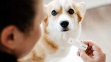 Тест на беременность для собак создали в Финляндии
