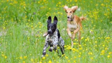 Нейросеть научили диагностировать у собак СДВГ