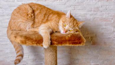 зонд кошек