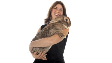 Кролики гигантских пород подвержены особому перелому, выяснили учёные